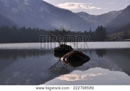 Reflection of trees from the water, reflection from the lake