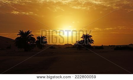 Sunset in the north african desert in a oasis, A white sun on a background of orange sky above some palm trees and dunes in Mauritania