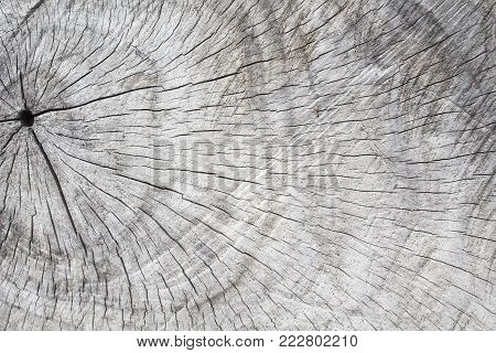 Natural wood texture. Tree circles cut. Gray timber with weathered crack lines. Natural background for shabby chic design. Grey wooden board image. Aged tree surface. Wooden grit backdrop template