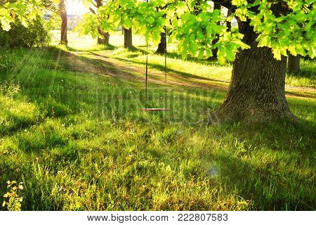 swing on big green tree. Sun rays through the branches of tree on bright summer day. Swing on the tree. scene of happy childhood