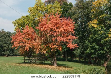 beautiful autumn trees with red, yellow and green leaves in the park on a sunny day.
