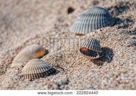 Beautiful seashells on the shore, seashells on the beach on a Sunny day