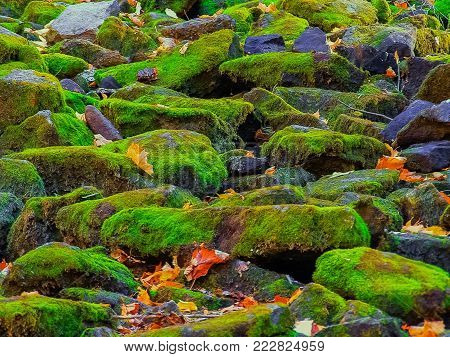 Halton Hills area, Niagara escarpment, gorgeous amazing closeup view of many stones covered with beautiful green  reindeer moss, background