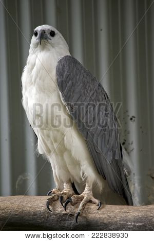 the sea eagle is perched on the branch