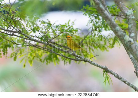 Small Bird Holding Branch With The Beak