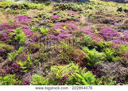 travel to France - moorland in Ploumanac'h site of Perros-Guirec commune on Pink Granite Coast of Cotes-d'Armor department in the north of Brittany in sunny summer day
