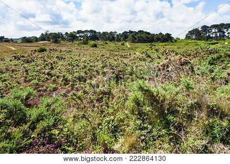 travel to France - view of natural parkland of Ploumanac'h site of Perros-Guirec commune on Pink Granite Coast of Cotes-d'Armor department in the north of Brittany in sunny summer day