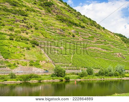 country landscape - hill slope with vineyards along Mosel river in Cochem - Zell region on Moselle wine route in sunny summer day in Germany