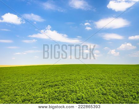 country landscape - blue sky with white clouds over green lucerne field near village L'Epine Marne in sunny summer day in Champagne region of France