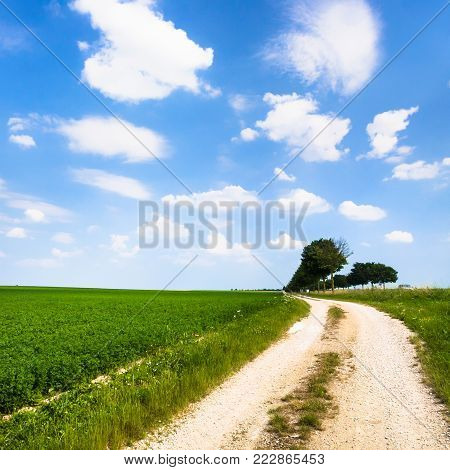country landscape - dirty road along alfalfa field near village L'Epine Marne in sunny summer day in Champagne region of France