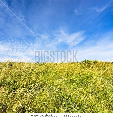 country landscape - meadow grasses on field under blue sky on Cap Gris-Nez of Cote d'Opale district in Pas-de-Calais region of France in summer day