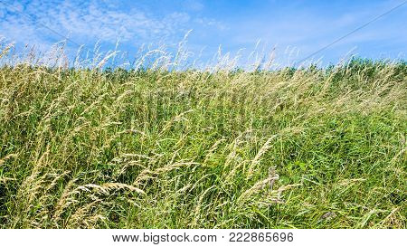country landscape - meadow grasses on field close up on Cap Gris-Nez of Cote d'Opale district in Pas-de-Calais region of France in summer day