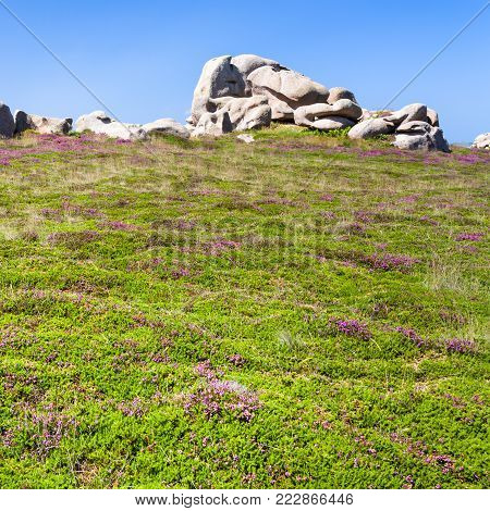 travel to France - boulder at green heathland in Ploumanac'h site of Perros-Guirec commune on Pink Granite Coast of Cotes-d'Armor department in the north of Brittany in sunny summer day