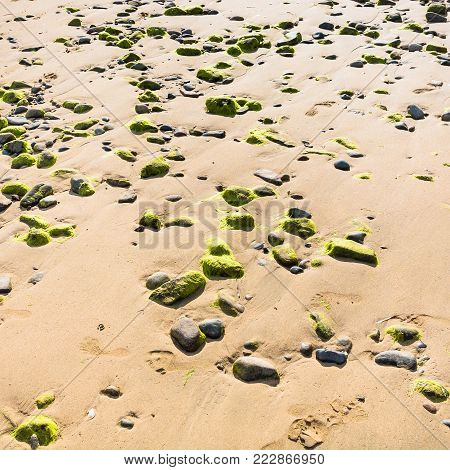 travel to France - surface of beach Plage de la Baie de Launay on bay Anse de Launay of English Channel in Paimpol region of Cotes-d'Armor department of Brittany during low tide in sunny summer day