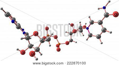 Nicotinamide Adenine Dinucleotide Molecular Structure Isolated On White