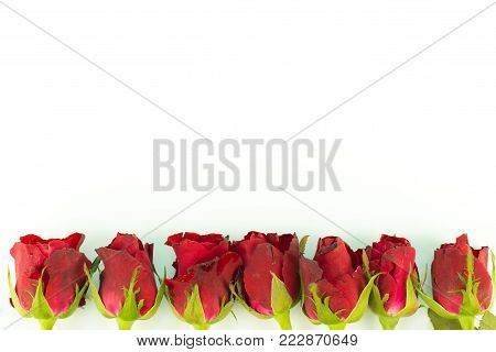 greeting card frame of red roses on a white background. with Copy space and using as Valentine day concept, love concept. wedding day, Symbol of Valentine's day.
