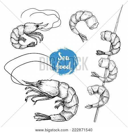 Hand drawn sketch style seafood set. Shripms, prawns, grilled shrimps on bamboo stickcollection vector illustrations.
