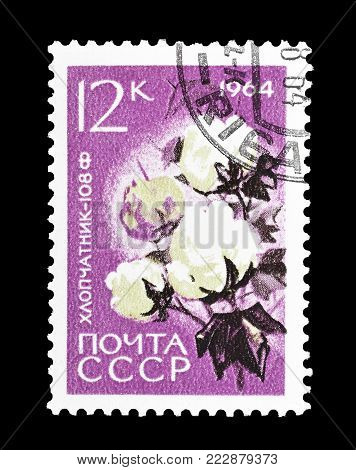 SOVIET UNION - CIRCA 1964 : Cancelled postage stamp printed by Soviet Union, that shows Cotton.