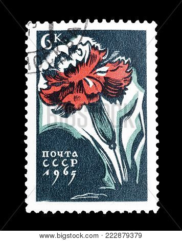 SOVIET UNION - CIRCA 1965 : Cancelled postage stamp printed by Soviet Union, that shows Carnation.