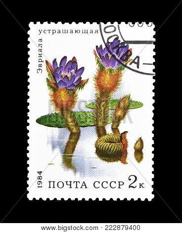 SOVIET UNION - CIRCA 1984 : Cancelled postage stamp printed by Soviet Union, that shows Prickly Water Lily.