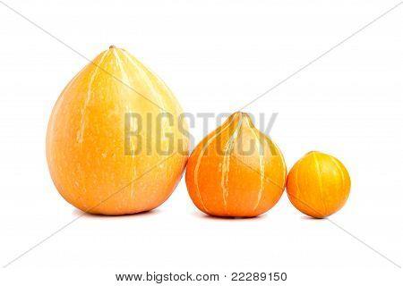 Three Pumpkins Abreast Isolated