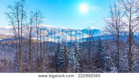 Scenic winter panorama of Carpathian Mountains with snowy peaks, extreme terrain slopes and pine tree wood forest in Ukraine