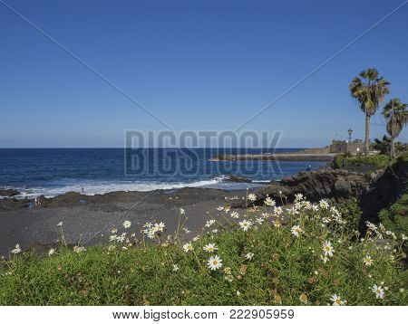 view on Playa Jardin beach in Puerto de la Cruz, Tenerife with blue sea horizon, rocks, sand and blooming daisy flowers and palm tree with blue sky background