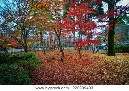 Kyoto, Japan - Nov 28, 2016. Autumn Park In Kyoto, Japan. Kyoto Was The Capital Of Japan For Over A