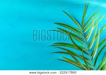 Spiky Palm Tree Leaf on Painted Light Blue Wall Background. Bright Morning Sunlight Leaks. Hipster Funky Style Pastel Colors. Seaside Vacation Fun Wanderlust Fashion Concept. Copy Space