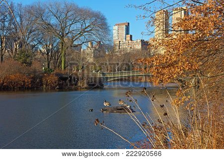 The Lake with its wildlife near famous Bow Bridge in Central Park, New York, USA.  Landscape of the park with lake and urban Manhattan skyscrapers on horizon in winter.