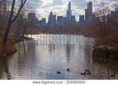 Winter landscape in New York Central Park with a view on Manhattan urban skyline. The Lake with birds in Manhattan skyscrapers reflection.