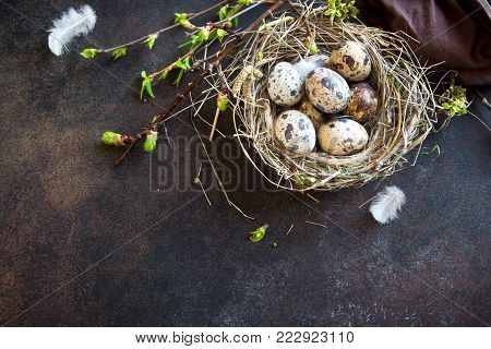 Easter Eggs in bird Nest on rustic metal background. Quail easter eggs with spring green leaves and feathers in nest on brown table with copy space. Spring, Easter or healthy organic food concept.
