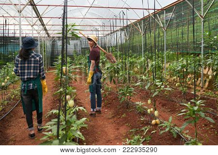 Asian cheerful Asian agro-engineers working in greenhouse