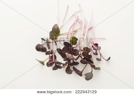 Micro greens isolated on white background, copy space, top view. Assortment of red kale baby sprouts, mockup for healthy eating and organic restaurant cooking advertisement