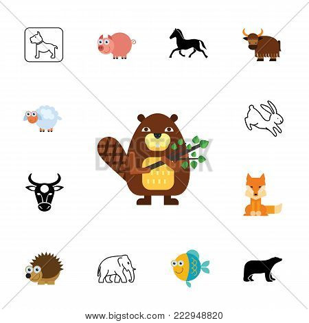 Icon set of animal species. Zoo, zoology, mammal. Animals concept. Can be used for topics like fauna, nature, biology