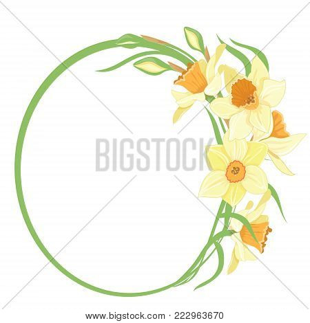 Bouquet narcissus, in a round frame isolated vector clipart illustration of spring narcissus flowers
