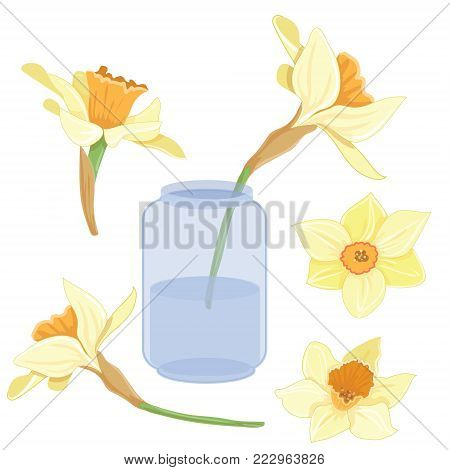 Bouquet narcissus on a vase isolated vector clipart illustration of spring narcissus flowers