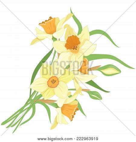 Bouquet narcissus, isolated vector clipart illustration of spring narcissus flowers