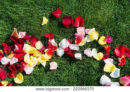 Colorful roses petals on the grass like a florid path to the guests white chairs