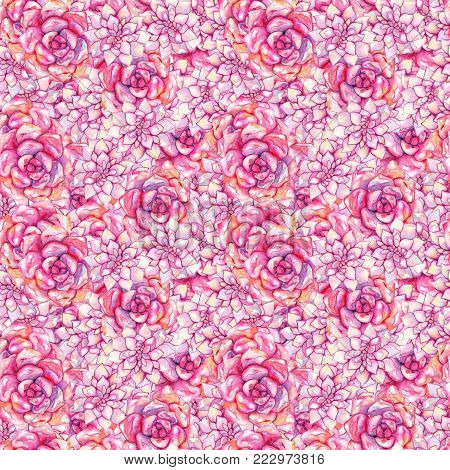 Watercolor pink echeveria succulent rose flower plant hand drawn seamless pattern