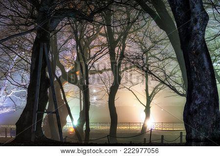 Gyerim Forest In Gyeongju At Night