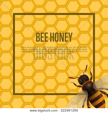 Honeybee on honeycomb retail banner. Natural product advertising, traditional and healthy vegan food, sweet delicacy vector illustration. Insect symbol for organic farming, food production design. poster