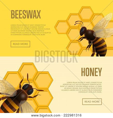 Fresh honey and beeswax retail banners. Honeybee flyers for organic farming, food production design. Natural product advertising, traditional and healthy vegan food, sweet delicacy vector illustration