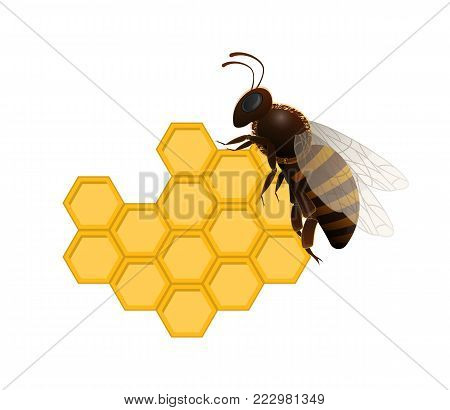 Honeybee on fresh honeycomb isolated on white background. Traditional and healthy vegan food, sweet delicacy vector illustration. Insect object for organic farming, natural food production design.