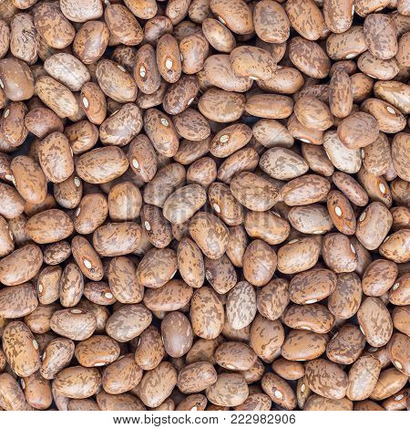 Uncooked dry pinto beans on a gray concrete background, top view, square