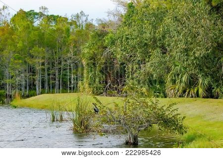 Anhinga Perched In A Tree In A Swamp Landscape