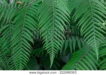Green fern tree in the in a big forest