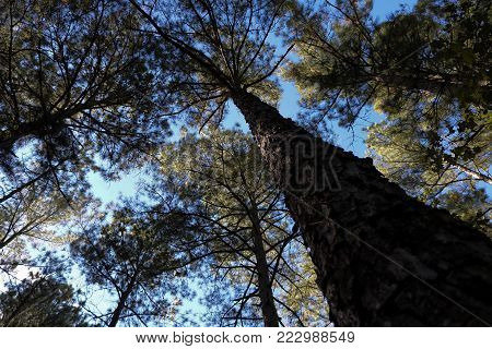 Tall tree at Raven Rock park in North Carolina