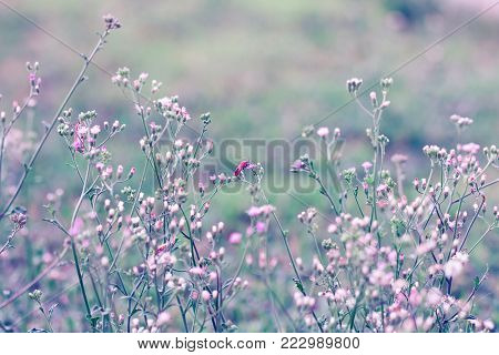 Meadow flower, beautiful fresh in soft warm light. Autumn landscape pastel tone background.