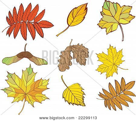 Set Of Leaves Isolated On White Background